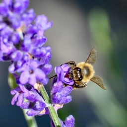 September Bees and Fall Blues